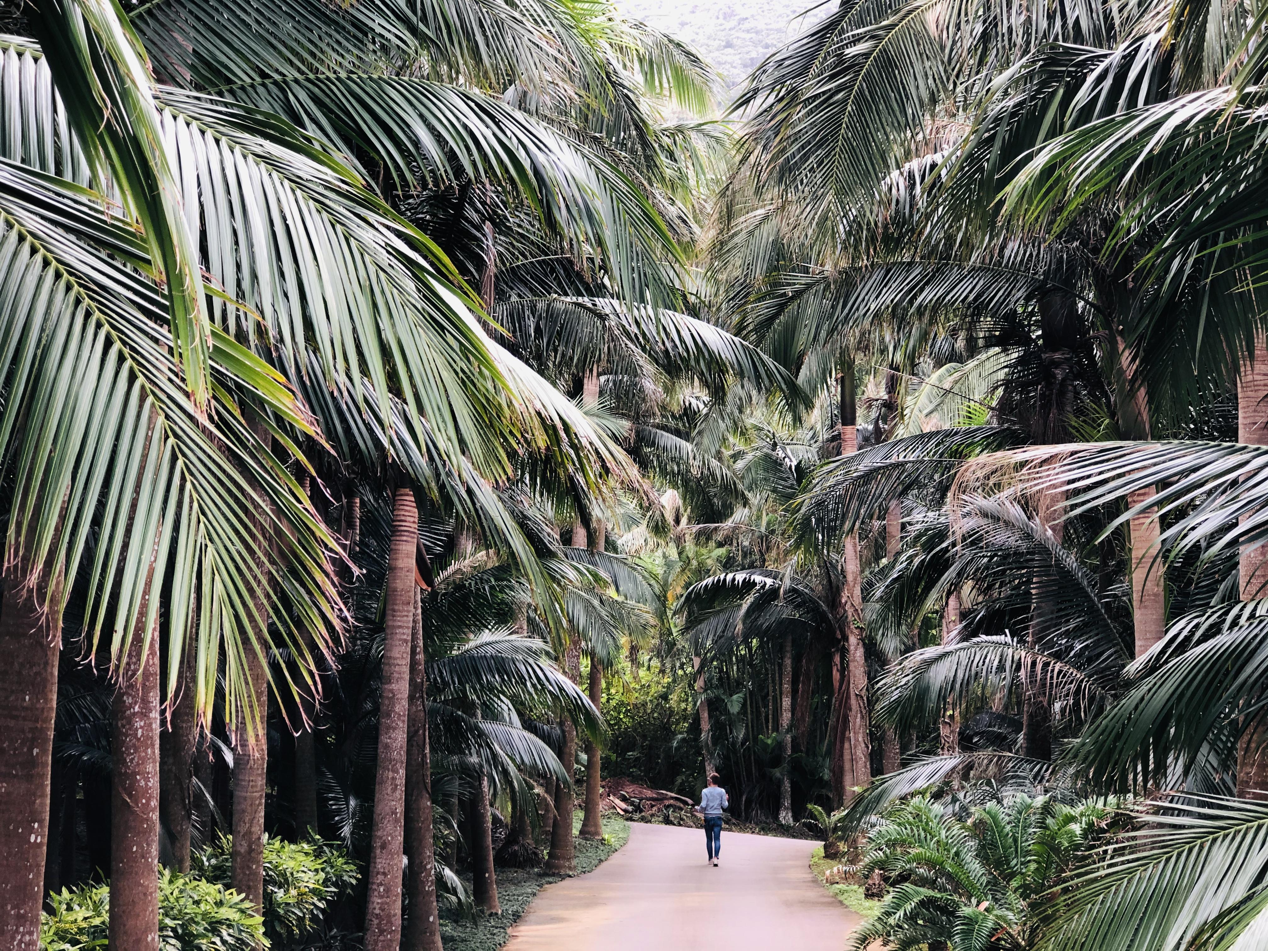 石垣島の隠れ観光スポット「ヤエヤマヤシ群落」で自然を満喫♪